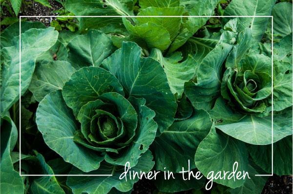 Dinner-in-the-Garden